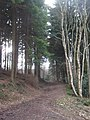 Footpath in Tower Wood - geograph.org.uk - 1757209.jpg
