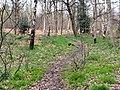 Footpath through Greno Wood - geograph.org.uk - 156698.jpg