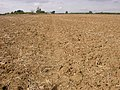 Footpath through Ploughed Field - geograph.org.uk - 236650.jpg