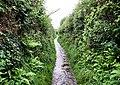 Footpath to Penmaen Burrows - geograph.org.uk - 1492042.jpg
