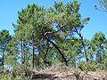 Forêt de la Coubre 027.jpg