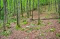 Forêt des Palanges (3).jpg