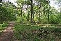 Forêt domaniale de Bois-d'Arcy 51.jpg