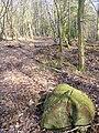 Forest Track, Monkwood - geograph.org.uk - 368881.jpg