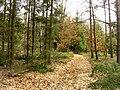 Forest by Horní Bříza.jpg