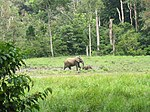 Forest elephants (8330452550).jpg