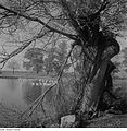 Fotothek df ps 0002124 Bäume ^ Landschaften ^ Seenlandschaften - Teichlandschaft.jpg