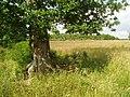 Freshfield Farm footpath - geograph.org.uk - 24709.jpg