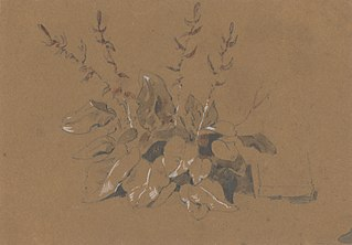 Study of Flowering Plant