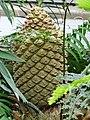 Garden Primeval - US Botanic Gardens 39.jpg
