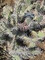 Gardenology.org-IMG 2317 hunt0903.jpg
