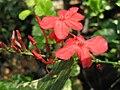 Gardenology.org-IMG 7413 qsbg11mar.jpg