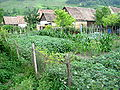 Gardens and Houses - Biertan - Romania.jpg