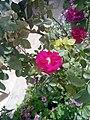 Gardens in Iraq 11.jpg