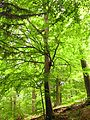 Geo-Naturpark Bergstraße Odenwald.jpg