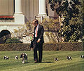 George H. W. Bush with his pet Millie and her puppies.jpg