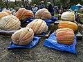 Giant Pumpkin Festival 10.20.07 013.jpg
