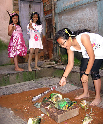 Mohani - Girls chop up an ash gourd symbolising the destruction of evil during Mohani