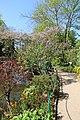 Giverny, Fondation Claude Monet, jardin14.jpg