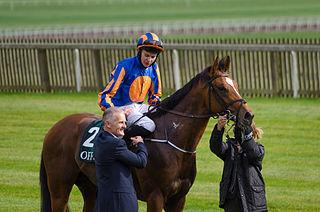 Gleneagles (horse) Irish-bred Thoroughbred racehorse