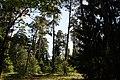 Gmina Narew, Poland - panoramio (77).jpg