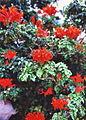 Gran Canaria (Flora) 06.jpg