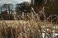 Gras - panoramio.jpg