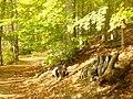 Griebnitzsee Promenade - Waldweg (Woodland Walk) - geo.hlipp.de - 29810.jpg