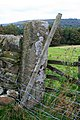 Gritstone Gatepost - geograph.org.uk - 1513552.jpg