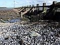 Groyne with shells - geograph.org.uk - 577649.jpg