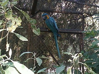 The Nest (aviary) - Blue Macaw adapted to captivity