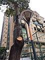 HK CWB 銅鑼灣 Causeway Bay 摩頓台 Moreton Terrace tree HKCL street lamp October 2019 SS2 01.jpg