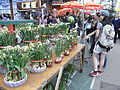 HK CWB Victoria Park Chinese New Year Flower Fair 03 水仙花 Chinese sacred lily Visitors.jpg