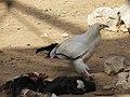 Hai Bar Yotvata Nature Reserve 43.jpg