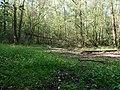 Hambach forest 62.jpg