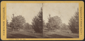 Hamilton College campus view no. 10, by Seward, H. W. (H. Walton), d. 1871.png