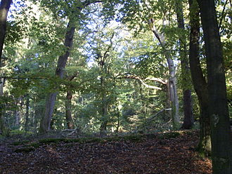History of the forest in Central Europe - Handewitter Forest in Schleswig-Holstein, North Germany