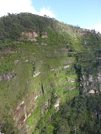 Swamps of the Blue Mountains - Hanging swamps