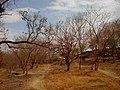 Hanuman Tekdi - panoramio.jpg