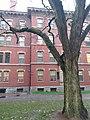 Harvard University,. November, 2019. pic.ar2 Cambridge, Massachusetts.jpg