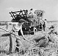 Harvesting at Mount Barton, Devon, England, 1942 D10307.jpg