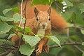 Hazel hunter (explored) - Flickr - hedera.baltica.jpg