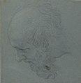 Head of a Bearded Man Looking to Upper Left MET 62.149.jpg