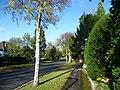 Heath Drive, Sutton (geograph 3731377).jpg