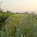 Hedgerow near Cranesden Farm - geograph.org.uk - 121179.jpg
