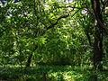 Heirin-ji Forest.JPG