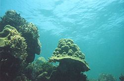 Hen Chicken reef 1999.jpg