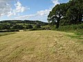 Henryd hay field - geograph.org.uk - 1397155.jpg