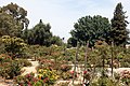 Heritage Rose Garden, San Jose - panoramio (2).jpg