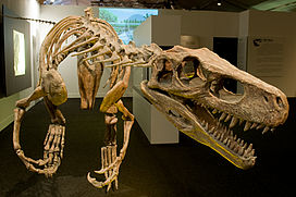 Skeleton of a carnivorous dinosaur, with open jaws and sharp teeth prominently in the foreground.